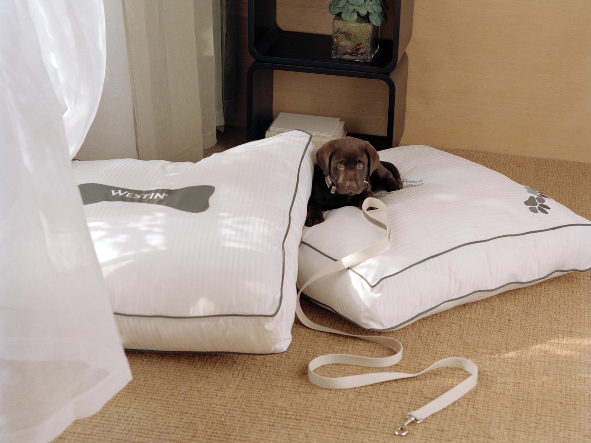 The Westin Harbour Castle, Toronto - Heavenly Dog Bed